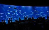 [葛西] 20~45才 水族館♪ ~1人参加~【葛西】