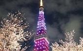 [芝公園] 20・30代 ナイトタワー&夜桜♪ ~1人参加~【芝公園】