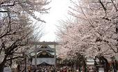 [飯田橋] 25~45才 パワースポット&桜♪ ~1人参加~【飯田橋】
