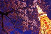[芝公園赤羽橋] ❤特別春割引❤インスタ映え!東京タワー展望台チケットがペアーで当たる♪東京タワーが望める芝公園にて、お花...