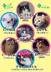 [勝どき] 男性2名緊急募集!!〜保護猫のいる恋活イベント〜