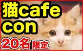 【男性25〜35歳×女性24〜35歳!】かわいい子猫にキュン☆猫好きに悪い人はいない☆猫カフェコン『ニャンダフル☆』@ねころび池袋店