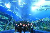[東京] ★8/20 品川水族館の恋活・友達作り ★ 自然な出会いはここから★ カップル報告あり★