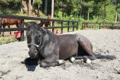 [大井競馬場前] 馬のプロと行く、【競馬】観戦!!現役乗馬インストラクターからの馬の解説が聞けちゃうかも!?