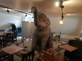 【中央沿線で友活の輪】おしゃれな街、吉祥寺の象がいるカフェで開催するカフェ会【オレンジライン主催】
