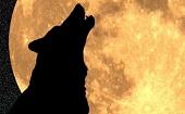 [新宿] 人狼ゲームを夜までやらNight!ゲームをしながら未来の人脈を作る大人の遊び交流会