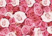 [新宿] 女性限定!アロマ会開催! アロマセラピストが貴方に必要な香りプレゼントします。