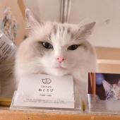 [] 第143回 猫カフェ貸切もふもふ人狼&ボードゲーム会vol.40