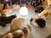 第145回 猫カフェ貸切もふもふ人狼&ボードゲーム会vol.41